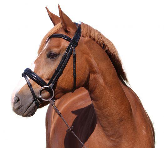"""Оголовье трензельное с английским капсулем Shiny Croco, """"Horse Comfort"""""""
